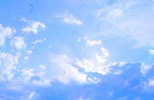 飛蚊症の人が見える空